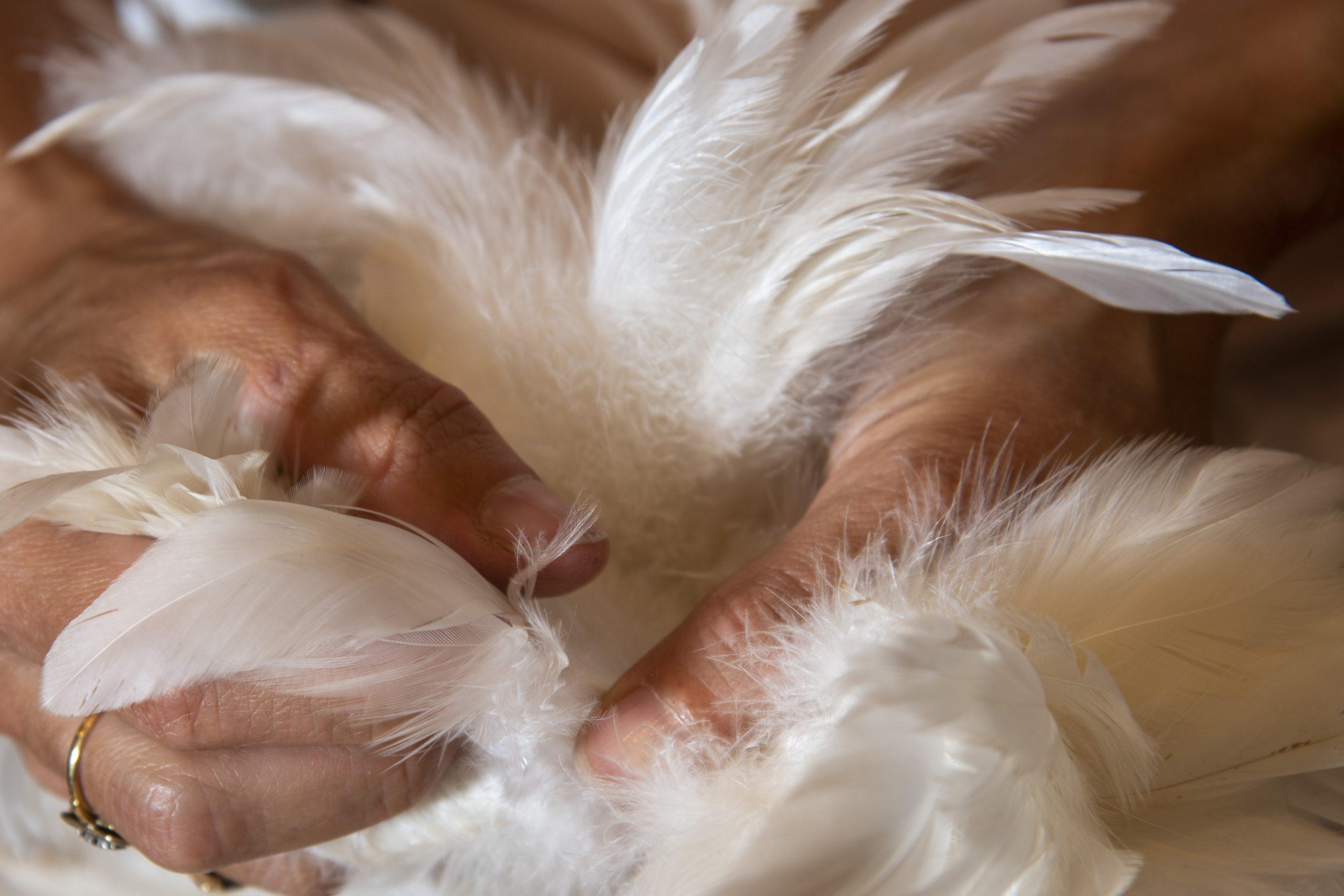 plumes-de-coq-plumasserie-johanna-braitbart